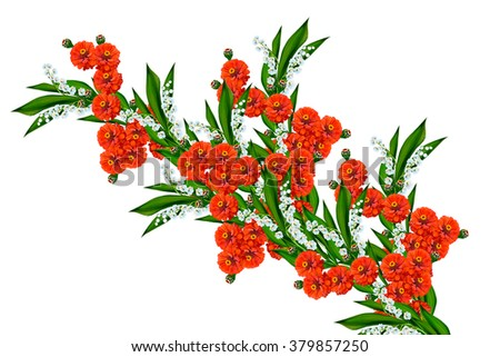 Zinnias flowers isolated on white background. delicate flowers - stock photo