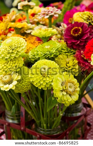 Zinnias for sale at a farmers market - stock photo