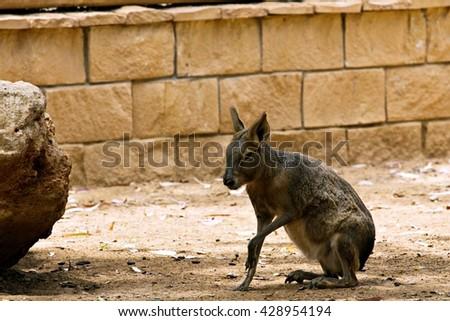 zoo animals in Cyprus zoo park - stock photo