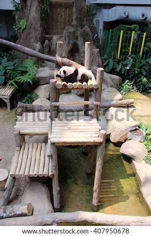 Zoo Negara, MALAYSIA - APRIL 9, 2016 : Nuan Nuan the first Baby Panda Born in Malaysia resting at his place - stock photo