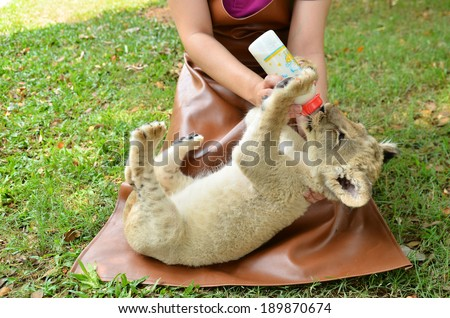 zookeeper take care and feeding baby lion - stock photo