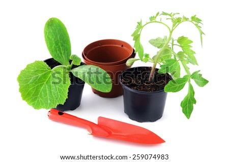 zucchini and tomato plant seedlings on white background with garden shovel.