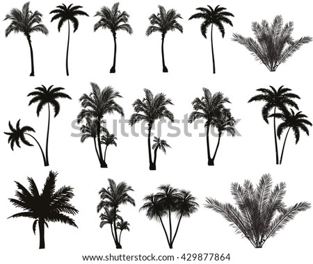 A large set of black vector silhouette of palm trees on white background. - stock vector