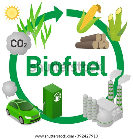 Biofuel life cycle, Biomass ethanol from corn, sugarcane, wood, diagram illustration - stock vector