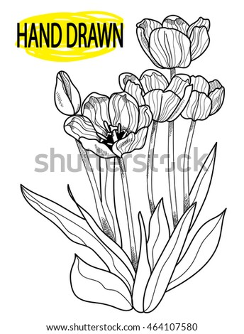 Blooming tulips Figure in vintage style. Engraving , drawing by hand.