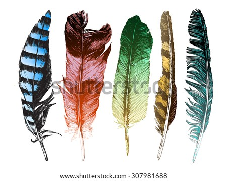 5 colorful hand drawn feathers on white background - stock vector