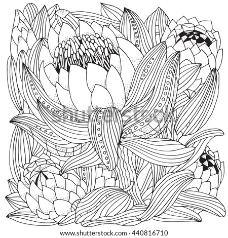 Coloring Book Page For Adult And Children Protea Flower Art King In Zentangle