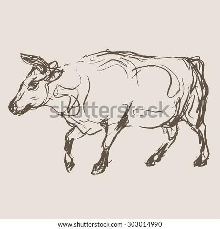cow hand draw sketch, vector - stock vector