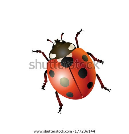 3D ladybug isolated on the white background  Vector Illustration  - stock vector