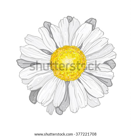 3D vector Illustration chamomile flowers. Beautiful white daisy flower isolated. For greeting cards and invitations of wedding, birthday, mother's day and other seasonal holiday - stock vector