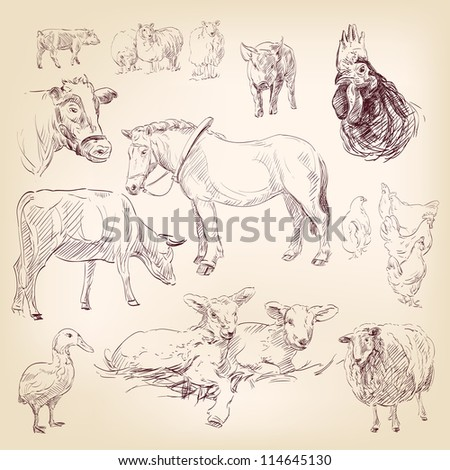 farm collection  animal hand drawn  vector illustration  isolated - stock vector