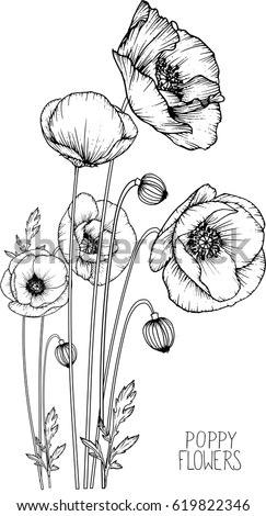 Flowers drawing poppy flower vector illustration stock vector flowers drawing poppy flower vector illustration and line art mightylinksfo Image collections