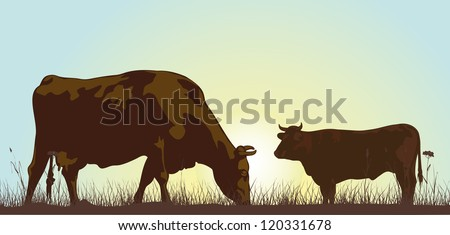 grazing cattle in the morning - stock vector