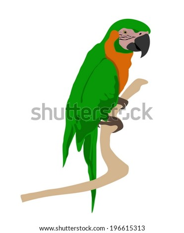 Green parrot macaw isolated on white background.