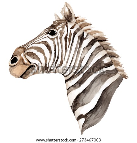 Hand painted watercolor Zebra head. Vector illustration.