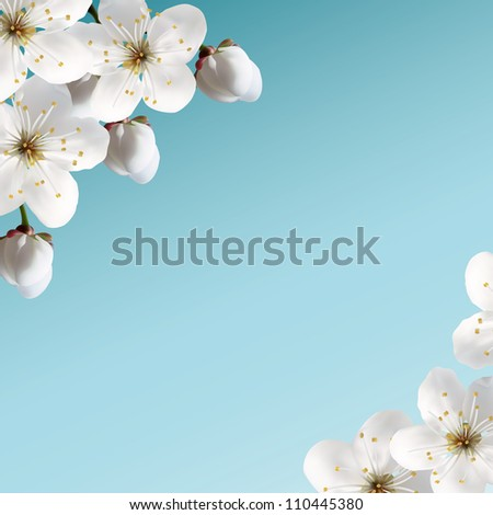 ?herry blossoms - stock vector