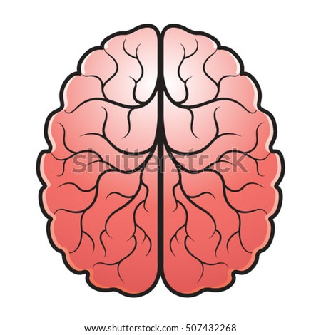 human brain in color vector drawing