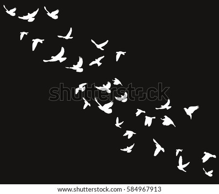 isolated silhouette of birds flying on a black background