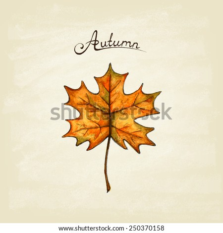 Maple  leaf. Watercolor. Autumn. Hand drawn design elements. Vector illustration.  - stock vector