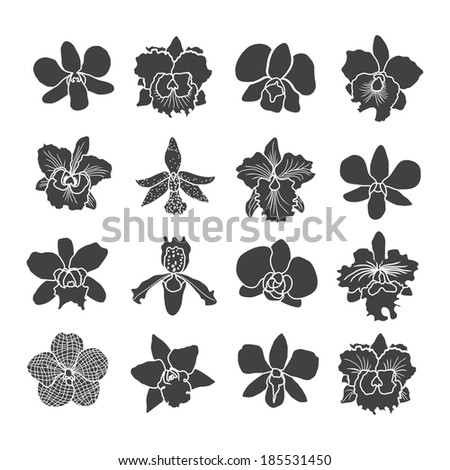 orchid flowers . Vector illustration. - stock vector
