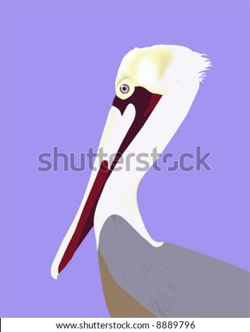 """Pelican Portrait"" vector file is hand drawn original artwork and is in AI-EPS8 format. - stock vector"