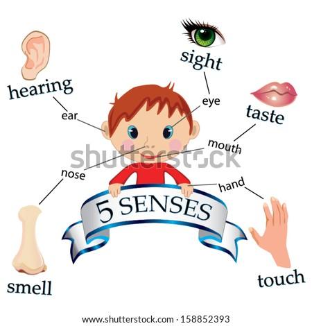 Five Senses Stock Images, Royalty-Free Images & Vectors   Shutterstock