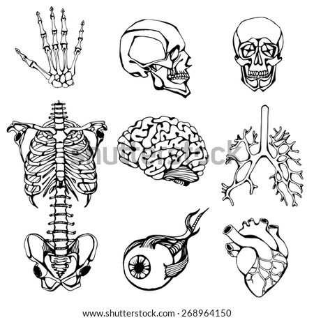 Search besides Human Respiratory System Diagram Unlabeled in addition Human Skeleton Vector also Search furthermore Search Vectors. on scary halloween organs