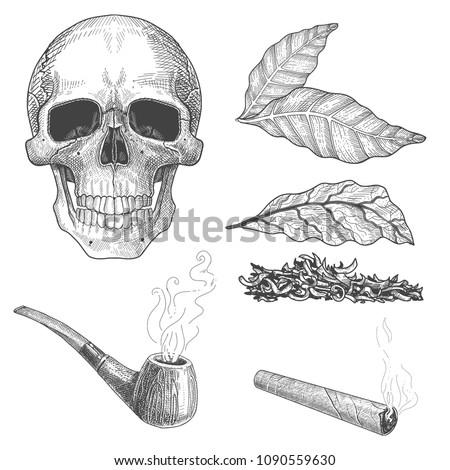 Tobacco Set Sketch Hand Drawn Illustration Vectores En Stock ...