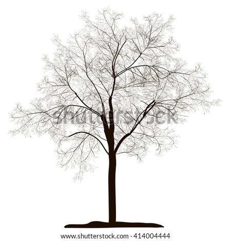 vector , isolated, tree silhouette