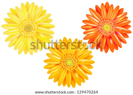 3 Yellow And Orange Gerbers With Gradient Mesh, Isolated On White Background, Vector Illustration - stock vector