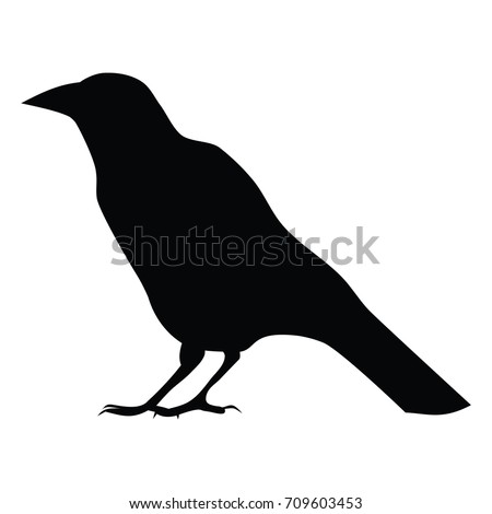 Crow Stock Images, Royalty-Free Images & Vectors ...