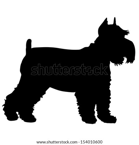 A black silhouette of a Schnauzer standing - stock vector