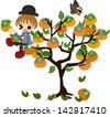 A boy climbs the persimmon tree and eats a persimmon. - stock vector