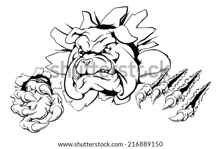 A bulldog sports mascot or character breaking out of the background or wall - stock vector
