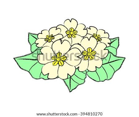 a bunch of primroses - stock vector