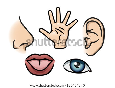 A cartoon illustration depicting the 5 senses. Smell, touch, hearing, taste and sight.