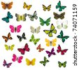 A collection of colorful butterflies. Vector illustration - stock vector