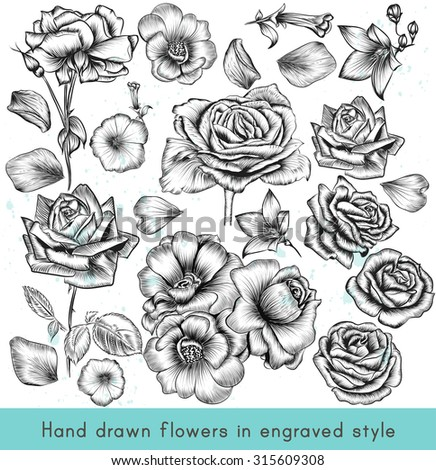 A collection of highly detailed vector hand drawn rose flowers in vintage engraved style - stock vector