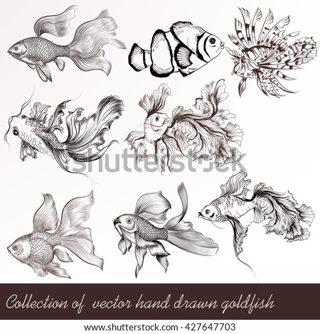 A collection or set of vector hand drawn goldfish in engraved vintage style