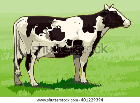A healthy holstein cow in pasture.