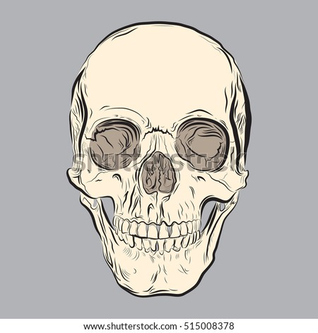 A human skull illustrated in vector format in a rough sketchy style.