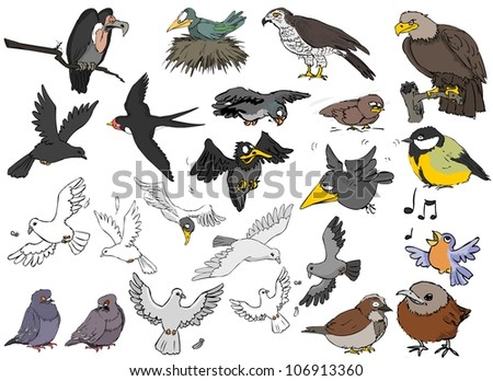 A large variety of birds on a white background