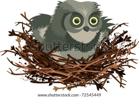 Owl Nests Pictures a Little Owl in The Nest