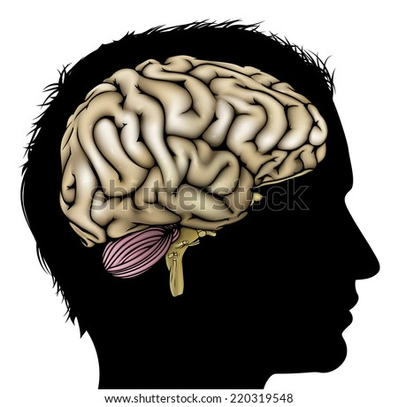 A mans head in silhouette with brain. Concept for mental, psychological, brain development, learning and education or other medical theme - stock vector