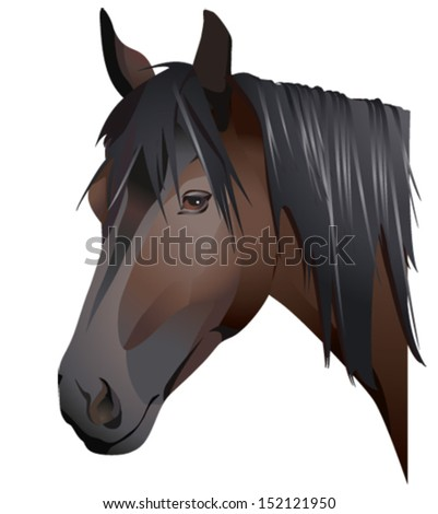 A portrait of a black horse - stock vector