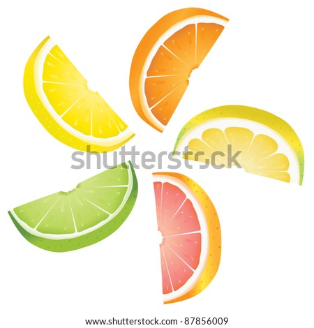A selection of citrus fruit slices arranged into a revolving shape. Illustrated are lemon, lime, orange, pink grapefruit and pomelo fruit.