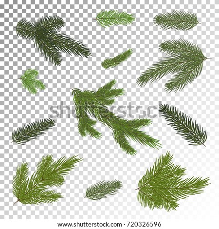 A Set Of Christmas Tree Branches For Decor Close Up