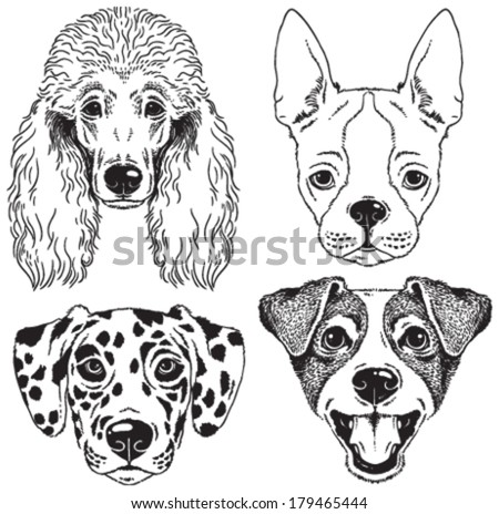 A set of 4 dog's faces: Poodle, Boston Terrier, Dalmatian, Fox Terrier. Black and white vector sketches. - stock vector