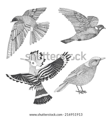 a set of four abstract hand drawn birds: hoopoe, swallow, thrush and wood pigeon