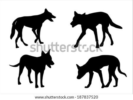 a set of four australian dingo on white background - stock vector